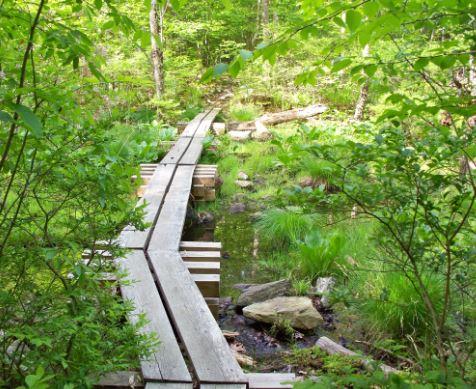 trail type - Boardwalk trail for hiking